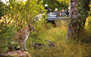 Lion-Sands_Safar-Xscape4u_Game-Drive-Leopard