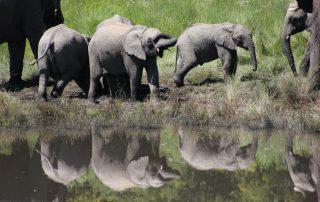 Hlosi-Game-Lodge-Xscape4u-Elephants-At-Waterhole-Amakhala-Game-reserv