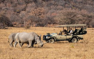 Lepogo-Xscape4u-Noka-Camp-Game-Drive-Lapalala-Wilderness
