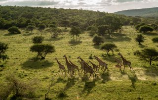 Lepogo-Xscape4u-Noka-Camp-Giraffe-Lapalala-Wilderness