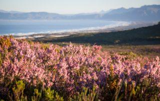 Grootbos-Nature-Reserve-Xscape4u-landscape