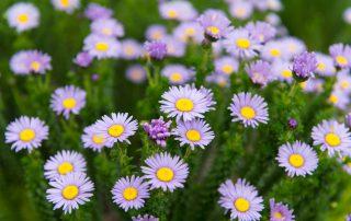 Grootbos-garden-lodge-flowers