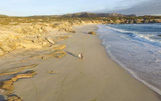 Grootbos-experience-Xscape4u-coastal-safari-walk