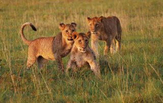 Lentaba-Lodge-Xscape4u-Lion-Lalibela-Game-Reserve