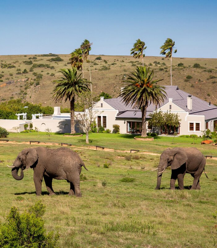 Mills-Manor-Xscape4u-Elephant-at-manor-Lalibela-Game-Reserve