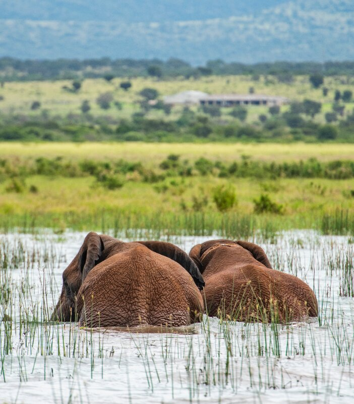 Tandweni-Xscape4u-Elephant-in-Jozini-Dam-Pongola