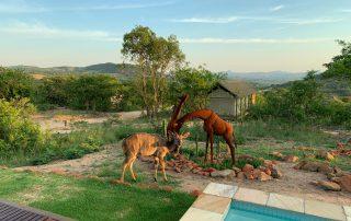 Ndhula-Luxury-Tented-Xscape4u-Pool-Likweti-Wildlife
