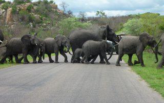 Ndhula-Luxury-Tented-Xscape4u-Elephant-Kruger-national-Park