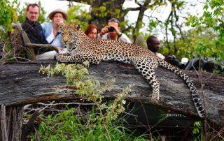 kambaku-river-sands-Xscape4u-Leopard-Timbavati-Game-Reserve
