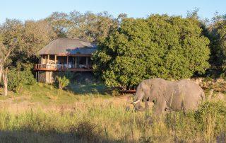 Dulini-River-Xscape4u-Elephant-at-lodge-Sabi-Sand-Game-Reserve