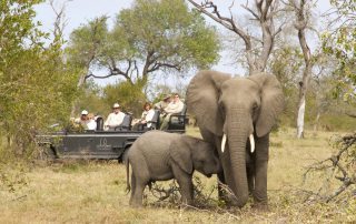Dulini-Leadwood-Xscape4u-Elephant-on-game-drive