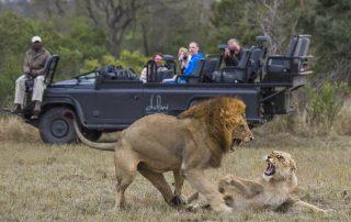 Dulini-Lodge-Xscape4u-Lion-sighting-on-game-drive-Sabi-Sand-Game-Reserve