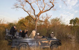 Dulini-River-lodge-Xscape4u-Leopard-in-Tree