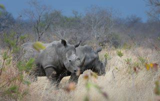 Dulini-River-Lodge-Xscape4u-Rhino-Sabi-Sand-Game-Reserve-