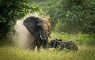 Savanna-Private-Game-Reserve-Xscape4u-Elephant-Sabi-Sand-Game-Reserve-
