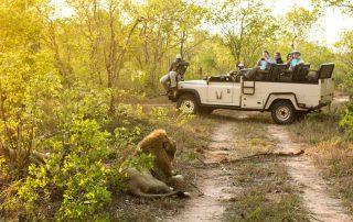 Chitwa-safari-Xscape4u-lion-Sabi-Sand-Game-Reserve