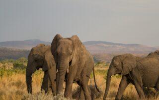 Nedile-Lodge-Xscape4u-Elephant-Herd-Welgevonden-Game-Reserve