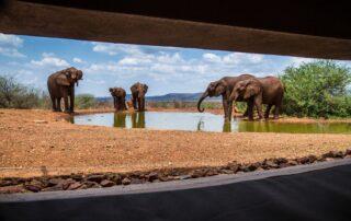 Rora-Molori-Safari-Xscape4u-Hide-Madikwe-Game-Reserve