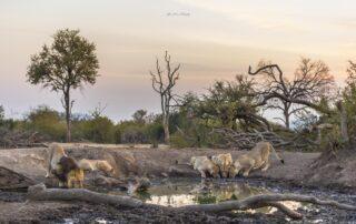 Impodimo-Xscape4u-Hide-view-Madikwe-Game-Reserve