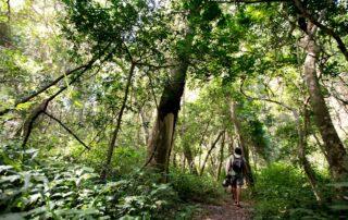Royal-Thonga-Walk-Tembe-Elephant-Park-Xscape4