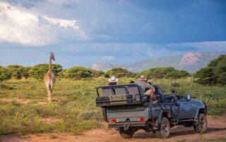 Marataba-Experiences-Giraffe-Xscape4u-Marakele-National-Park-Waterberg