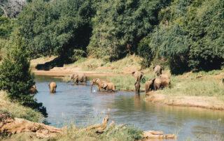 Baobab-Hill-Bush-Xscape4u-Elephant-Kruger-National-Park