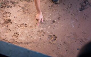 Marataba-Experiences-Print-identification-Xscape4u-Marakele-National-Park