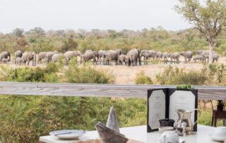 Simbambili-Game-Lodge-Xscape4u-Dining-Sabi-Sand-Game-Reserve