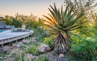 Ngala-Lodge-Garden-Elephant-Point-Greater-Kruger-Xscape4u
