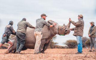 Founders-Conservation-Marataba-Marakele-National-Park-Xscape4u