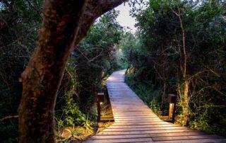 Royal-Thonga-Path-Tembe-Elephant-Park-Xscape4u