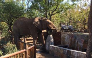 Etali-Safari-Elephant-Madikwe-Game-Reserve-Xscape4u-