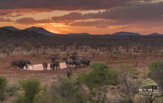 Etali-safari-waterhole-Madikwe-Game-Reserve-Xscape4u