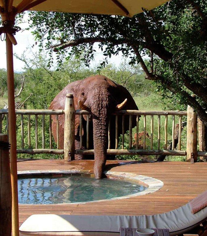 Etali-safari-Madikwe-Game-Reserve-Elephant-at-pool-Xscape4u